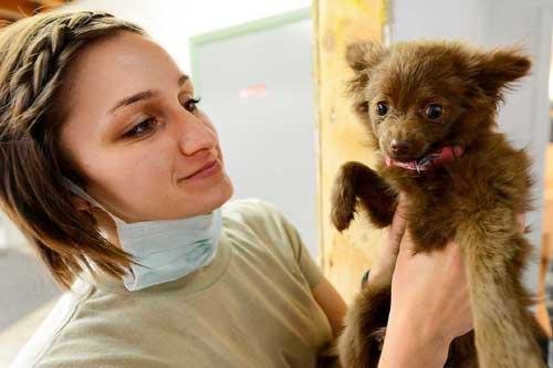 efectos secundarios vacunas perros