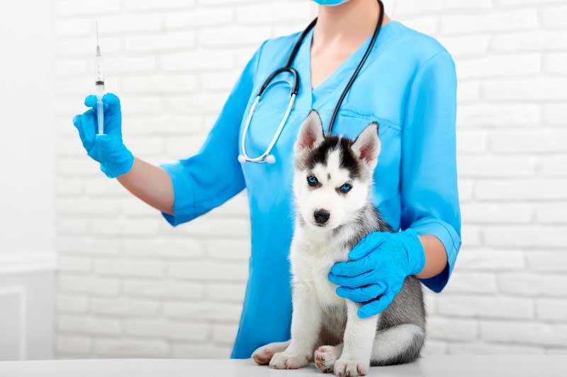 Vacunas para perros ¿Cuándo ponerlas? - El Blog de Zona K9
