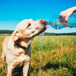 perro con hipo bebiendo agua