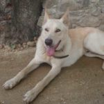 Can de Palleiro tumbado