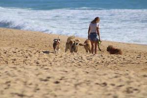 Una chica paseando unos perros por la playa.