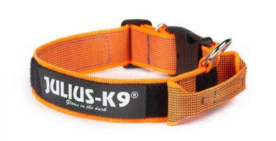 collar naranja julius